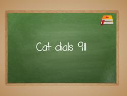Cat Dials 911